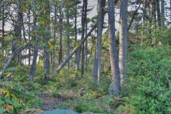 Photo of SW Neal Av, Waldport, OR 97394 (MLS # 728291)