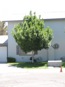 Photo of 136 S Lilac ST, Ridgecrest, CA 93555 (MLS # 1957122)