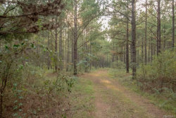 Photo of 81 ACRES COUNTY ROAD 61, Hartford, AL 36344-0000 (MLS # W20180430)