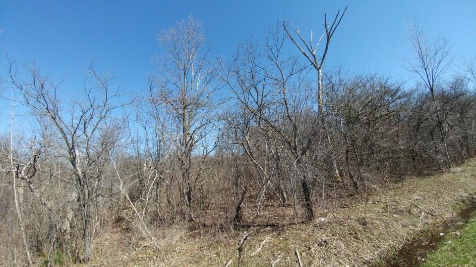 Photo for lot 1 part of 526 Bird Cemetery Road, Locke, NY 13092 (MLS # R1038386)