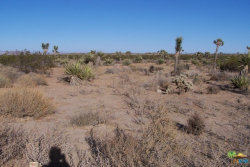 Photo of 2107 OLD WOMAN SPRINGS Road, Yucca Valley, CA 92284 (MLS # 17294562PS)