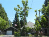 Photo of 17014 Skyway, Stirling City, CA 95978 (MLS # SN19152332)