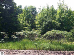 Photo of Lot 28 S Sugar Loaf Mountain Road, Maple City, MI 49664 (MLS # 1858591)
