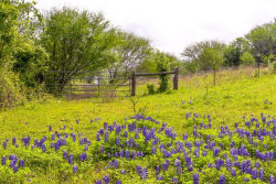 Photo of 0 Riverside Plantation Lane, Chappell Hill, TX 77426 (MLS # 16995322)