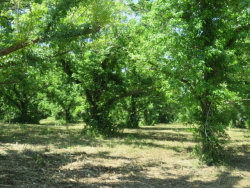 Photo of 00 County Rd 267, Elm Grove, TX 77434 (MLS # 21279204)