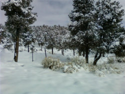Photo of 0 Lakeview Drive, Big Bear City, CA 92314 (MLS # 3173627)