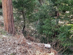 Photo of 0 Hook Creek Road, Cedar Glen, CA 92321 (MLS # 3182607)