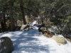 Photo of 0 Cedar Dell Road, Fawnskin, CA 92333 (MLS # 31902402)