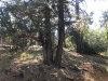 Photo of 399 Dixie Lee Lane, Sugarloaf, CA 92386 (MLS # 31906428)