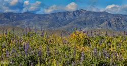 Photo of 0 N Columbia Mine Road, Lot 15 - 6 Acres, Morristown, AZ 85342 (MLS # 5772635)