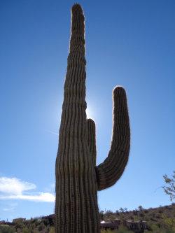 Photo of 10235 N Fire Canyon Drive, Lot 21, Fountain Hills, AZ 85268 (MLS # 5778891)