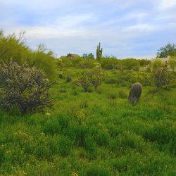 Photo of 31225 N 51st Place N, Lot 42, Cave Creek, AZ 85331 (MLS # 5881605)