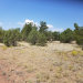 Photo of 1333 W Moonglow Drive, Ash Fork, AZ 86320 (MLS # 1032328)