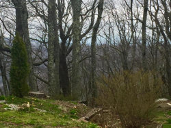 Photo of 391 Moytoy Rd 101, Crab Orchard, TN 37723 (MLS # 1048866)