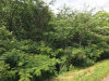 Photo of Pcl 022.02 Wilhite Road, Sevierville, TN 37876 (MLS # 1007197)
