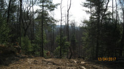 Photo of Duncan Woods Rd, Oliver Springs, TN 37840 (MLS # 1025469)