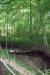 Photo of Long Branch Lot 4, Townsend, TN 37882 (MLS # 1028309)