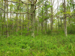Photo of Fritts Rd, Oliver Springs, TN 37840 (MLS # 1044840)