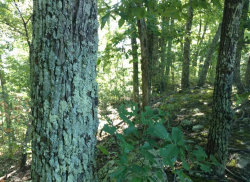 Photo of Lot 34 Black Oak Drive, Lot # 34, Sevierville, TN 37876 (MLS # 1059523)