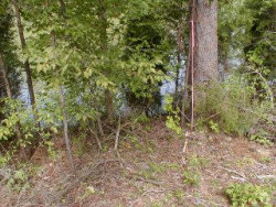 Photo of Lot 61 Blue Heron Drive, Lot # 61, Rockwood, TN 37854 (MLS # 1065098)