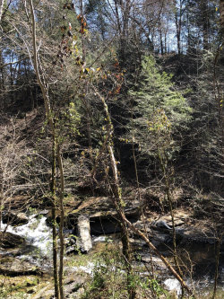 Photo of Lot 6 Old Birds Creek Rd, Lot # 6, Sevierville, TN 37876 (MLS # 1081573)