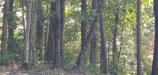 Photo of 3745 Chilhowee Tr, Lot # 34, Maryville, TN 37803 (MLS # 1122100)