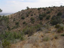 Photo of Icicle Drive, Pinon Hills, CA 92372 (MLS # 485271)