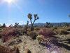 Photo of Pinon Hills, CA (MLS # 492901)