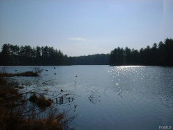 Photo of Swamp Pond Road Tr 37, Narrowsburg, NY 12764 (MLS # 4814714)