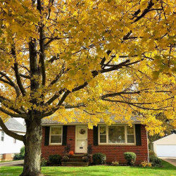 Photo of 1217 Elmwood Rd, Mayfield Heights, OH 44124 (MLS # 3980317)