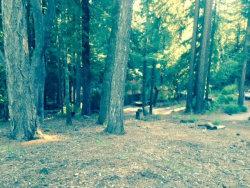 Photo of 0 Woodland, BOULDER CREEK, CA 95006 (MLS # 81533818)