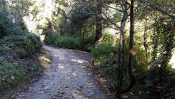 Photo of 1920 Lockhart Gulch RD, SCOTTS VALLEY, CA 95066 (MLS # 81632135)