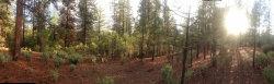 Photo of 10648 Bucktail DR, GROVELAND, CA 95321 (MLS # 81656894)