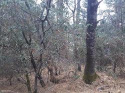 Photo of 15033 Brooks RD, GRASS VALLEY, CA 95945 (MLS # ML81651340)