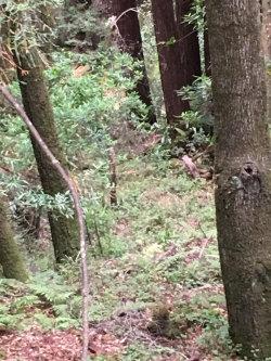 Photo of XOXO Redwood, APTOS, CA 95003 (MLS # ML81668133)