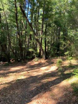 Photo of 18500 Highway 9, BOULDER CREEK, CA 95006 (MLS # ML81775741)