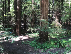 Photo of 0 Dry Well RD, BOULDER CREEK, CA 95006 (MLS # ML81791486)