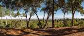 Photo of 15400 Madrone Hill RD, SARATOGA, CA 95070 (MLS # ML81823550)