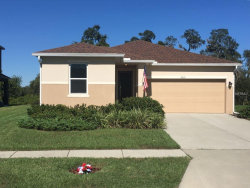 Photo of 15631 Mallard Rise Loop, SPRING HILL, FL 34610 (MLS # T2935026)