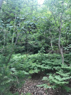 Photo of Lot 1 168th Avenue, Spring Lake, MI 49456 (MLS # 18033299)
