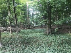Photo of Lots 271 & 272 Hickory Drive, South Haven, MI 49090 (MLS # 19045688)