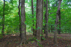 Photo of Lot 38 Beech Drive, South Haven, MI 49090 (MLS # 20040591)