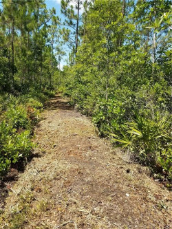 Photo of 401 Volusian Forest Trail, PIERSON, FL 32180 (MLS # O5719451)