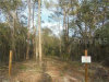 Photo of 6155 State Road 11, DE LEON SPRINGS, FL 32130 (MLS # V4910649)