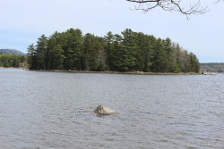Photo of 38 Dwelley Point Road, Franklin, ME 04634 (MLS # 1357805)