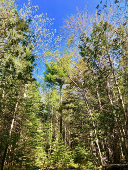 Photo of 45A Robinson Hill Road, Southwest Harbor, ME 04679 (MLS # 1404213)