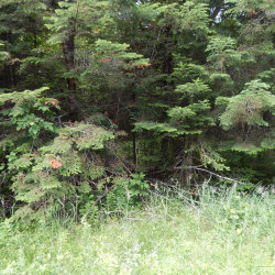 Photo of 0 Route 150, Willimantic, ME 04443 (MLS # 1424341)