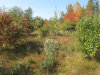 Photo of 00 Campground Road, Swanville, ME 04915 (MLS # 1471211)