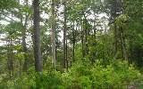 Photo of 1856 Marie, Lot 1856, Ellijay, GA 30540 (MLS # 6091951)