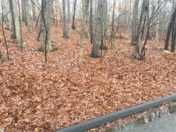 Photo of Woodhull Landing Rd, Miller Place, NY 11764 (MLS # 3189282)